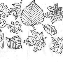 Image of Fall Leaf Coloring Page