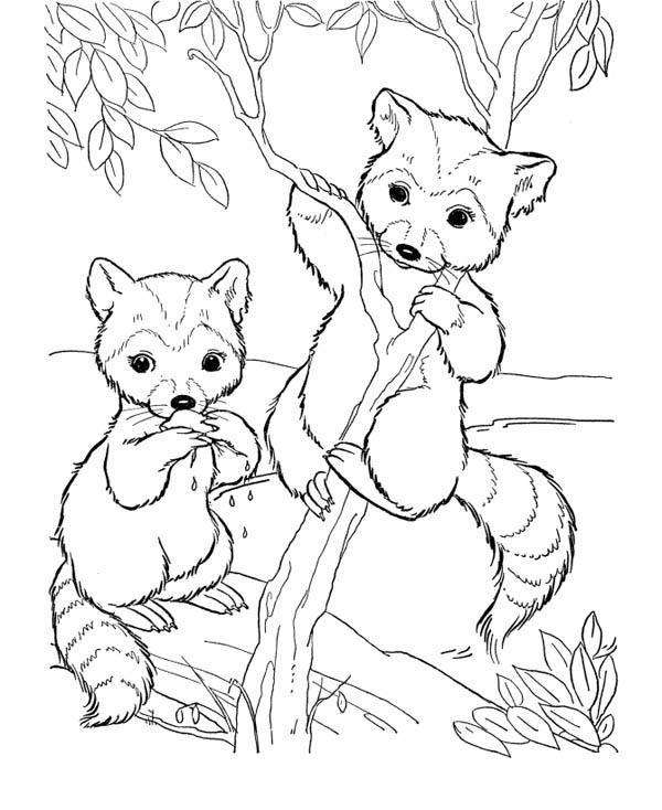 Little Raccoon Climbing Tree Coloring Page Netart