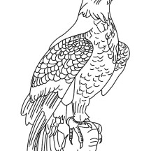 Male Bald Eagle Coloring Page