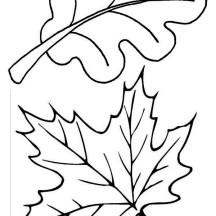 Maple and Oak Fall Leaf Coloring Page