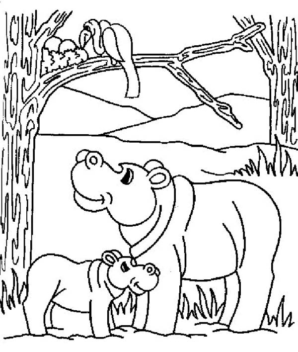 Mother Hippo and Her Baby in the Jungle Coloring Page