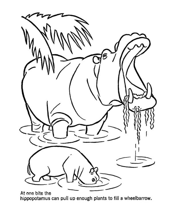 Mother Hippo and Her Baby in the Lake Coloring Page
