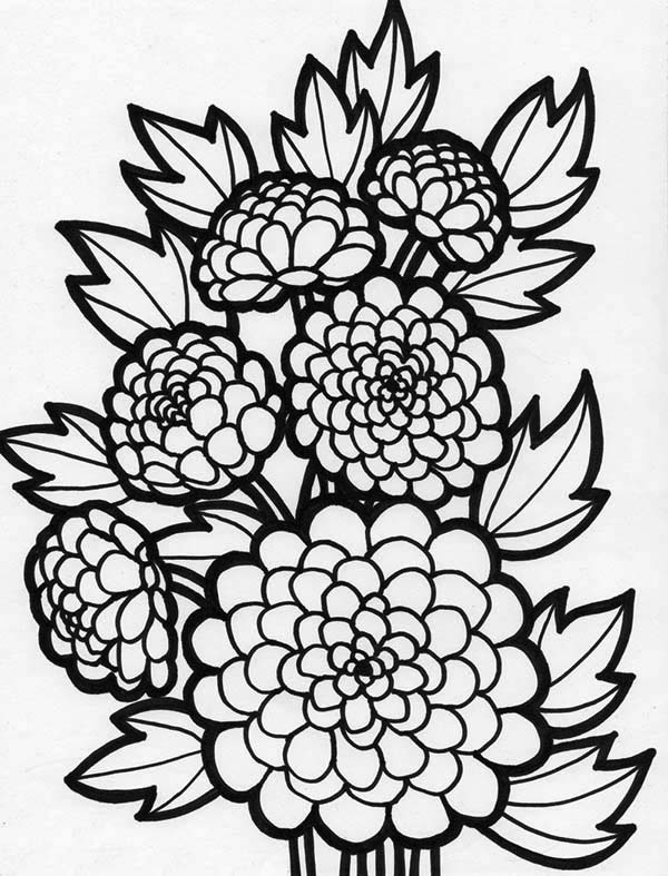 Peony Flower Coloring Page NetArt