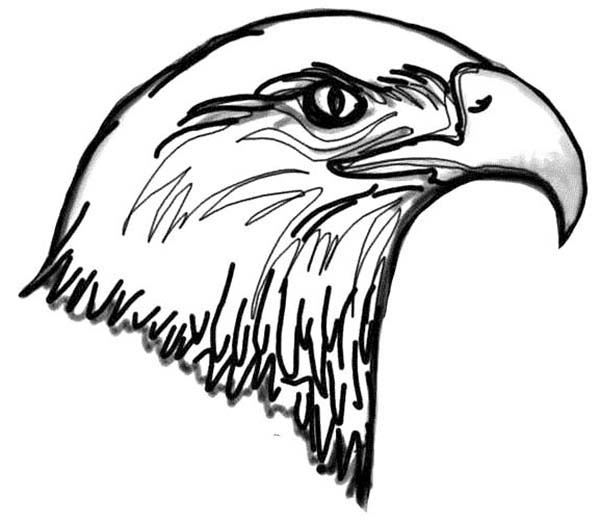 Picture of Bald Eagle Head Coloring Page