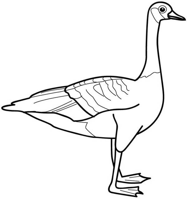 Picture of Goose Coloring Page NetArt