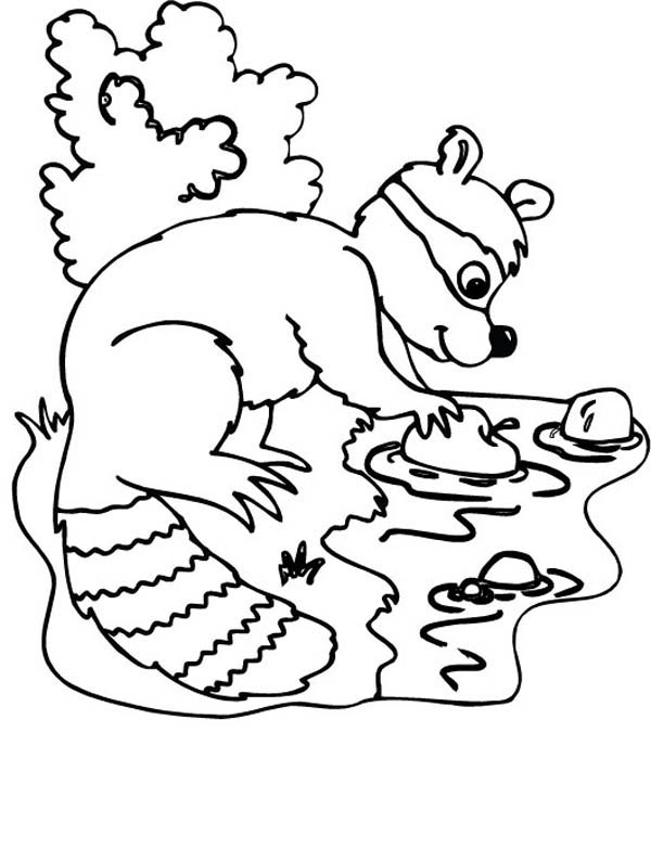 Raccoon Picking Apple Coloring Page