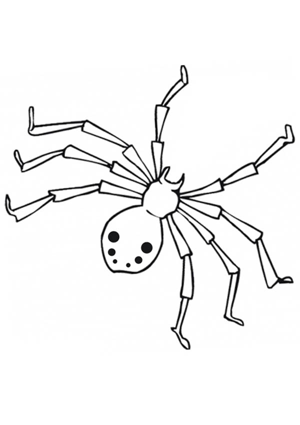realistic drawing of spider web coloring page