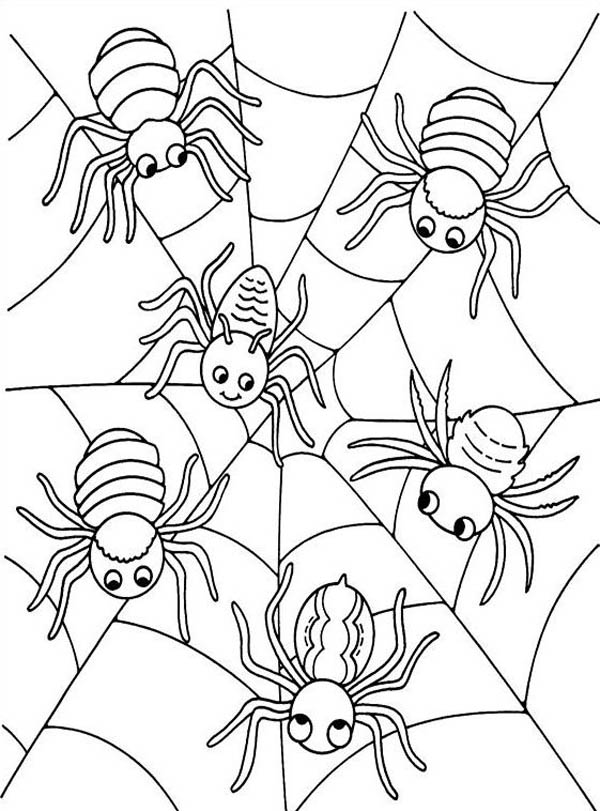 Six Cute Spider on Spider Web Coloring Page - NetArt