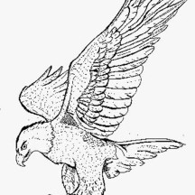 Smooth Landing Bald Eagle Coloring Page
