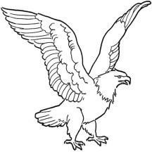 Soaring Bald Eagle Drawing Coloring Page