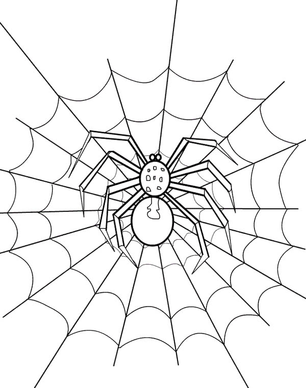 Spider Web Coloring Page NetArt