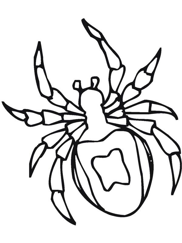 tarantula spider drawing coloring page