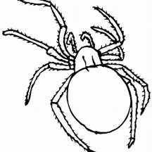 Tarantula Spider Picture Coloring Page