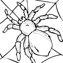 Tarantula on His Spider Web Coloring Page