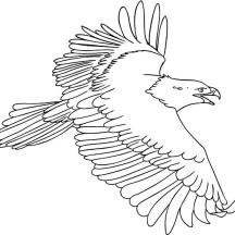 The Flying Bald Eagle Coloring Page