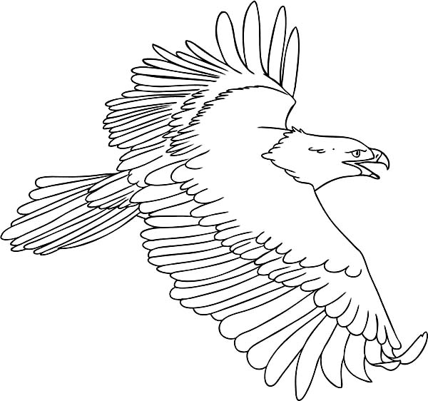 - The Flying Bald Eagle Coloring Page - NetArt