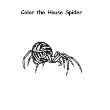 The House Spider Coloring Page