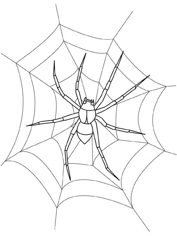 Waiting fro Food on Spider Web Coloring Page