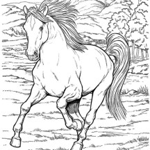Wild Horse in Horses Coloring Page