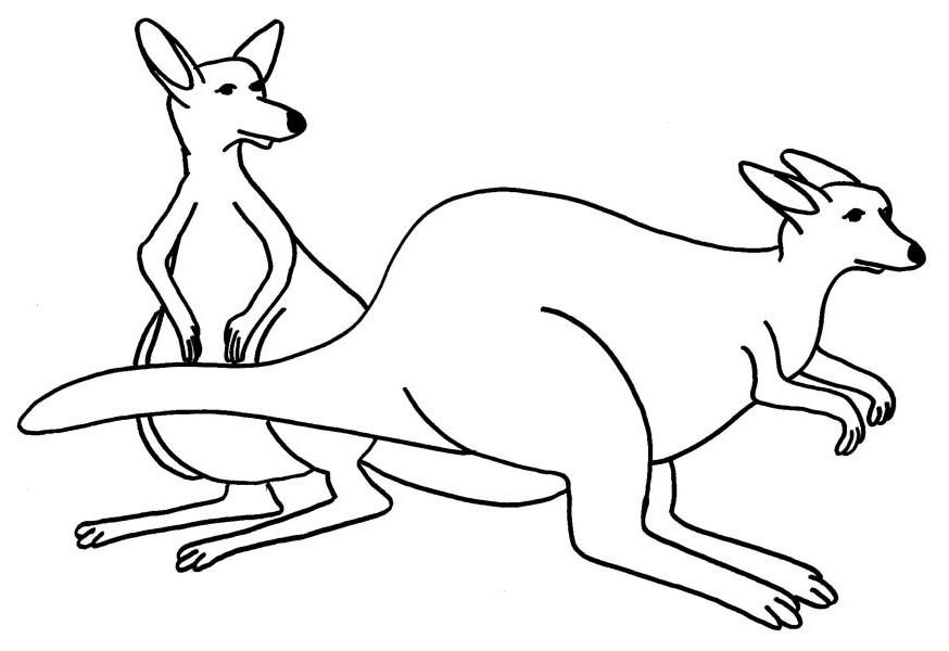 Awesome Kangaroo Couple Coloring Page