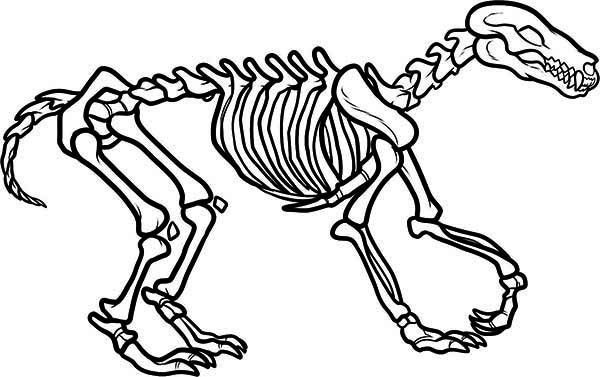 Awesome Wolf Skeleton Coloring Page
