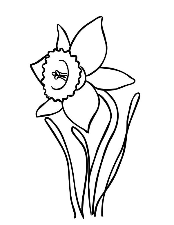 Blooming Daffodil Coloring Page