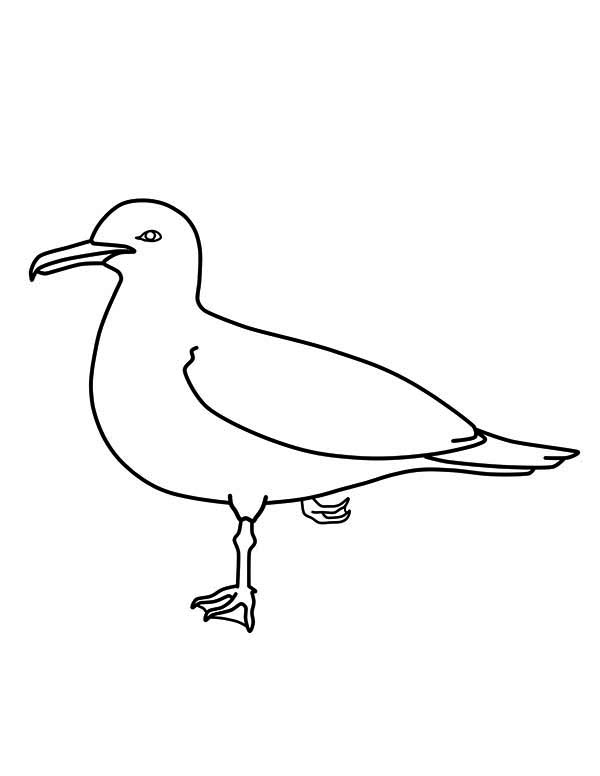 California Seagull Image Coloring Page