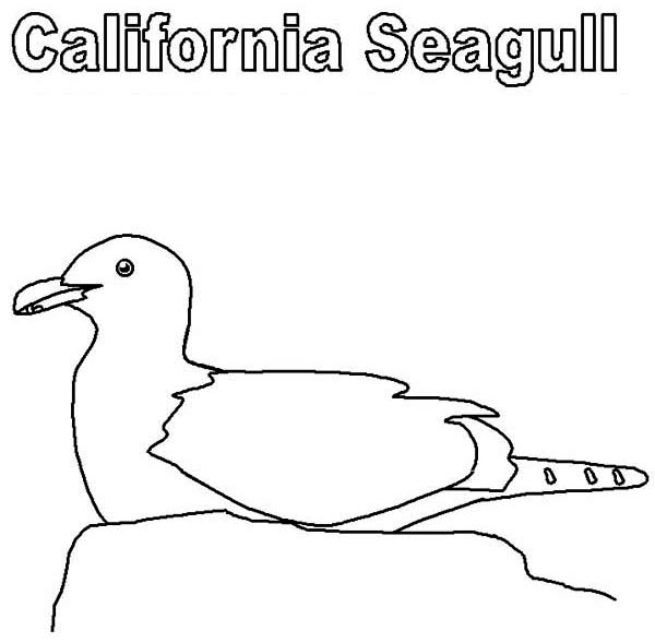 California Seagull Incubating Coloring Page