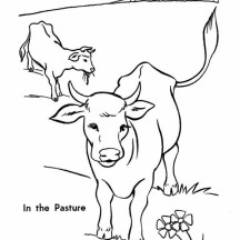 Cow in the Pasture Coloring Page
