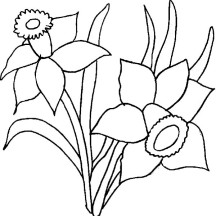 Daffodil Flower Coloring Page for Kids