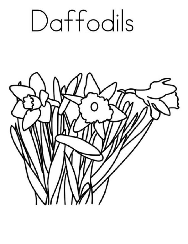 Daffodil in Blossom Coloring Page