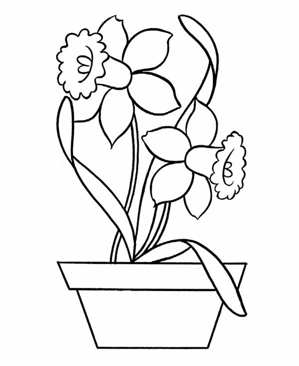 Daffodil in Pottery Coloring Page