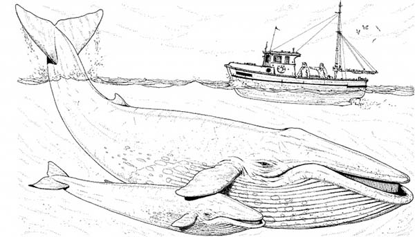 - Fishing Boat Over Two Blue Whale Coloring Page - NetArt