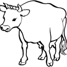 Healthy Cow Coloring Page