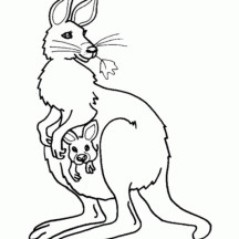 Kangaroo and Baby Kangaroo in the Pouch Coloring Page