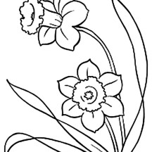 Picture of Daffodil Flower Coloring Page