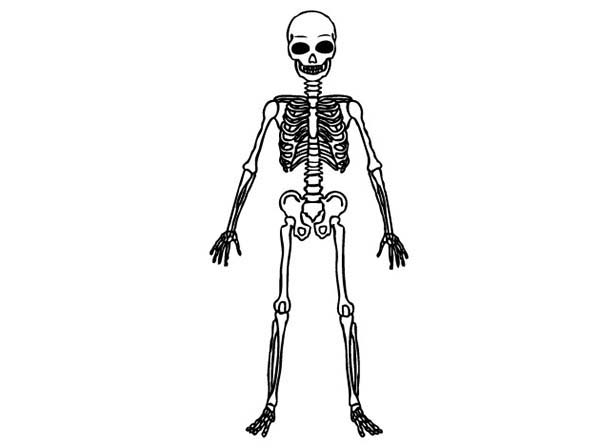 Picture of Human Skeleton Coloring Page