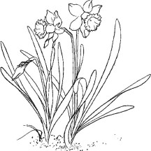 Planting Daffodil Coloring Page