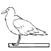 Sea Mew Seagull Coloring Page