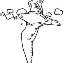 Seagull Flying Coloring Page