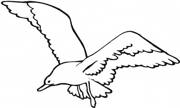 Seagull Hunt for Fish Coloring Page