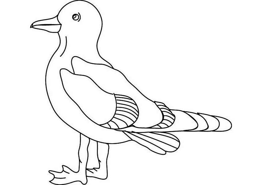 Seagull Rest After Flying Coloring Page