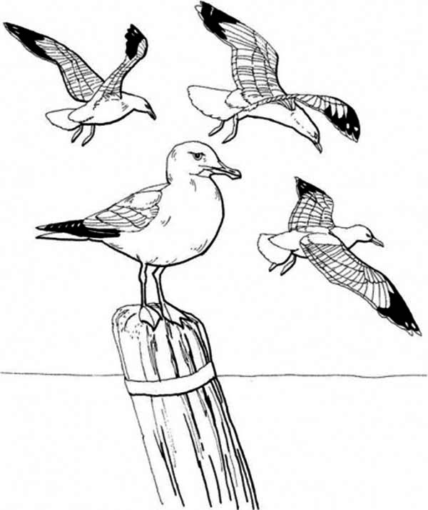 Seagull Standing on Dockyard Coloring Page