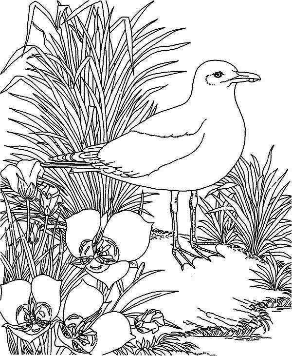 Seagull and Beautiful Flower Coloring Page