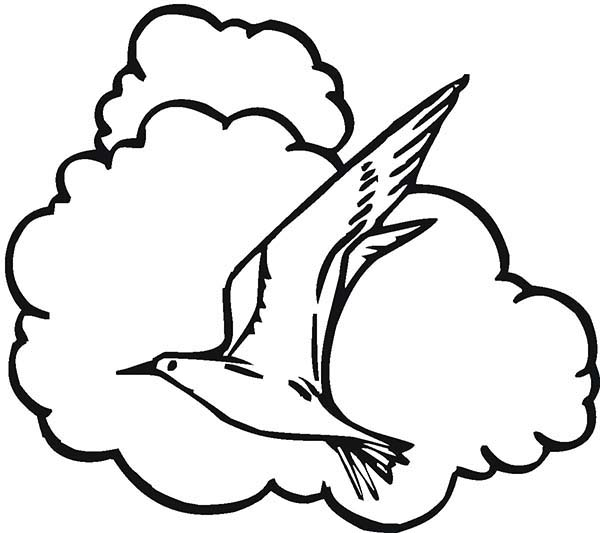 Seagull and the Clouds Coloring Page