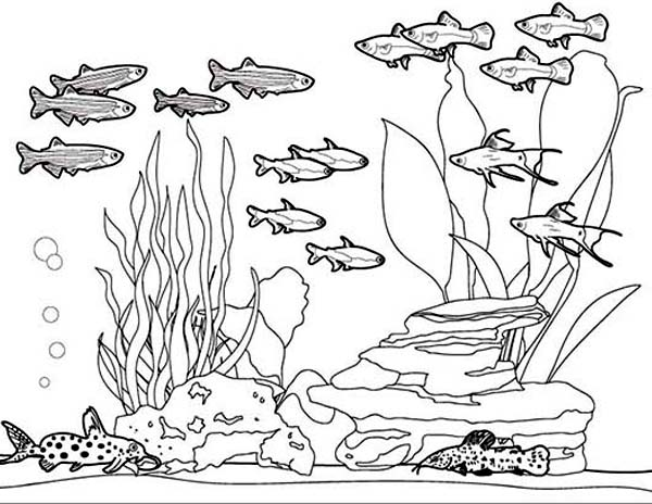 Amazing Picture of Fish Tank Coloring Page