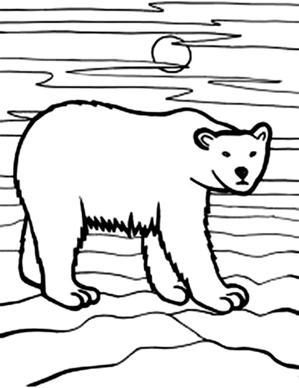 Bear Walking in the Night Coloring Page