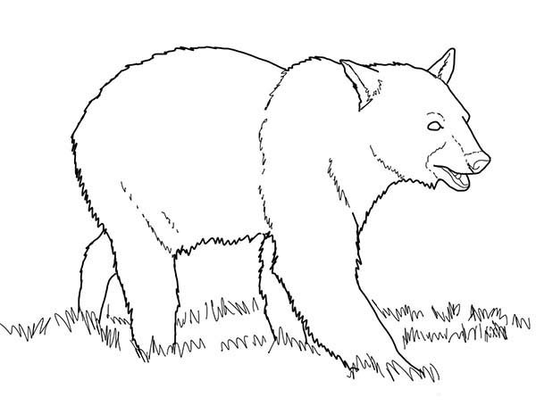 Bear Walking on the Meadow Coloring Page