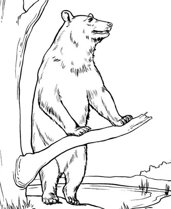 Brown Bear Breaking Tree Branch Coloring Page