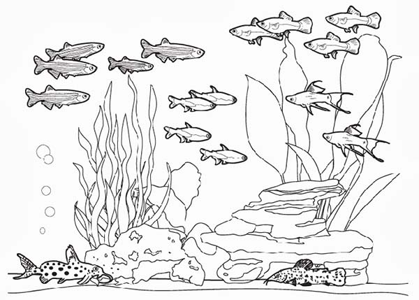 Complete Fish Tank Coloring Page
